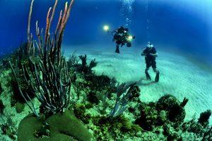 Pinne da immersione e snorkeling: quali scegliere?