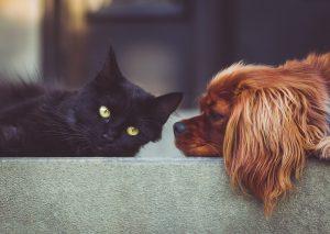 Videocamera di sorveglianza: il modo migliore per non lasciare mai solo il tuo animale domestico