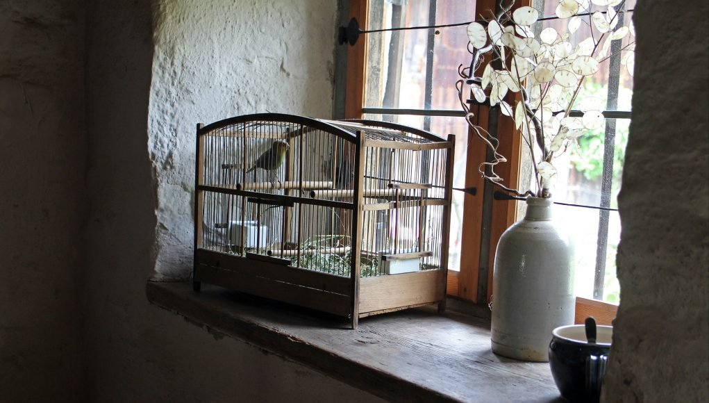 gabbietta per uccelli