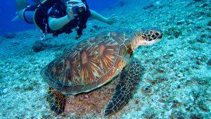 Attrezzatura da sub: ecco i migliori accessori per i subacquei