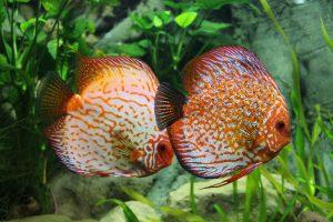 Piante vere per acquario: come scegliere evitando spiacevoli sorprese?
