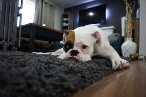 Tappeto: il complemento d'arredo per eccellenza per la tua casa