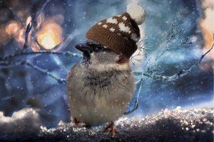 Berretto di lana: quale scegliere per proteggersi in modo efficace dal freddo?