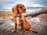 antiparassitari per cani