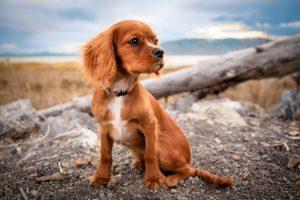 Antiparassitari per cani: i migliori contro pulci, zecche, zanzare e flebotomi