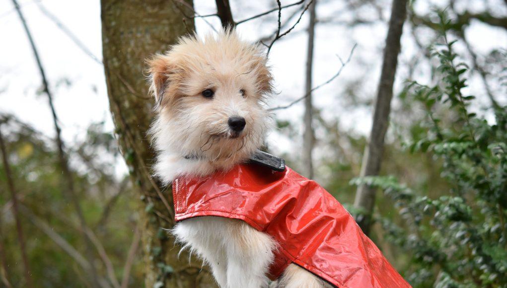 cappottini per cani