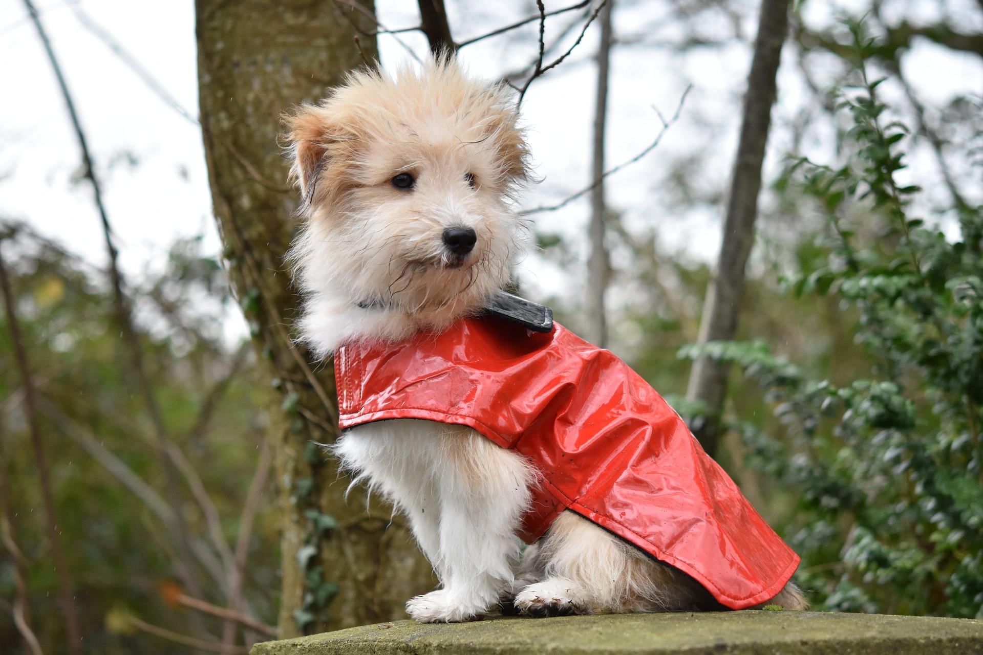 Cappotto Invernale per Cani Protezione Il Petto Gilet lautunno Inverno per Cani Cucciolo Gatto S PAWZ Road Giubbotti per Cani