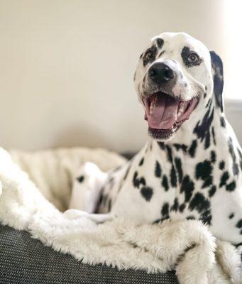 cuccia per cane