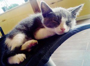 Cuccia per gatto: il giaciglio più confortevole per il riposo del tuo micio