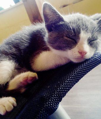 cuccia per gatto