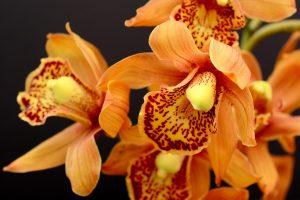 Orchidee: 5 prodotti per coltivare e curare questa splendida pianta