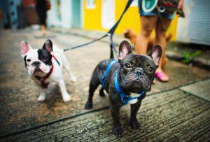 Guinzaglio per cani: lo strumento indispensabile per passeggiare con gli amici a quattro zampe