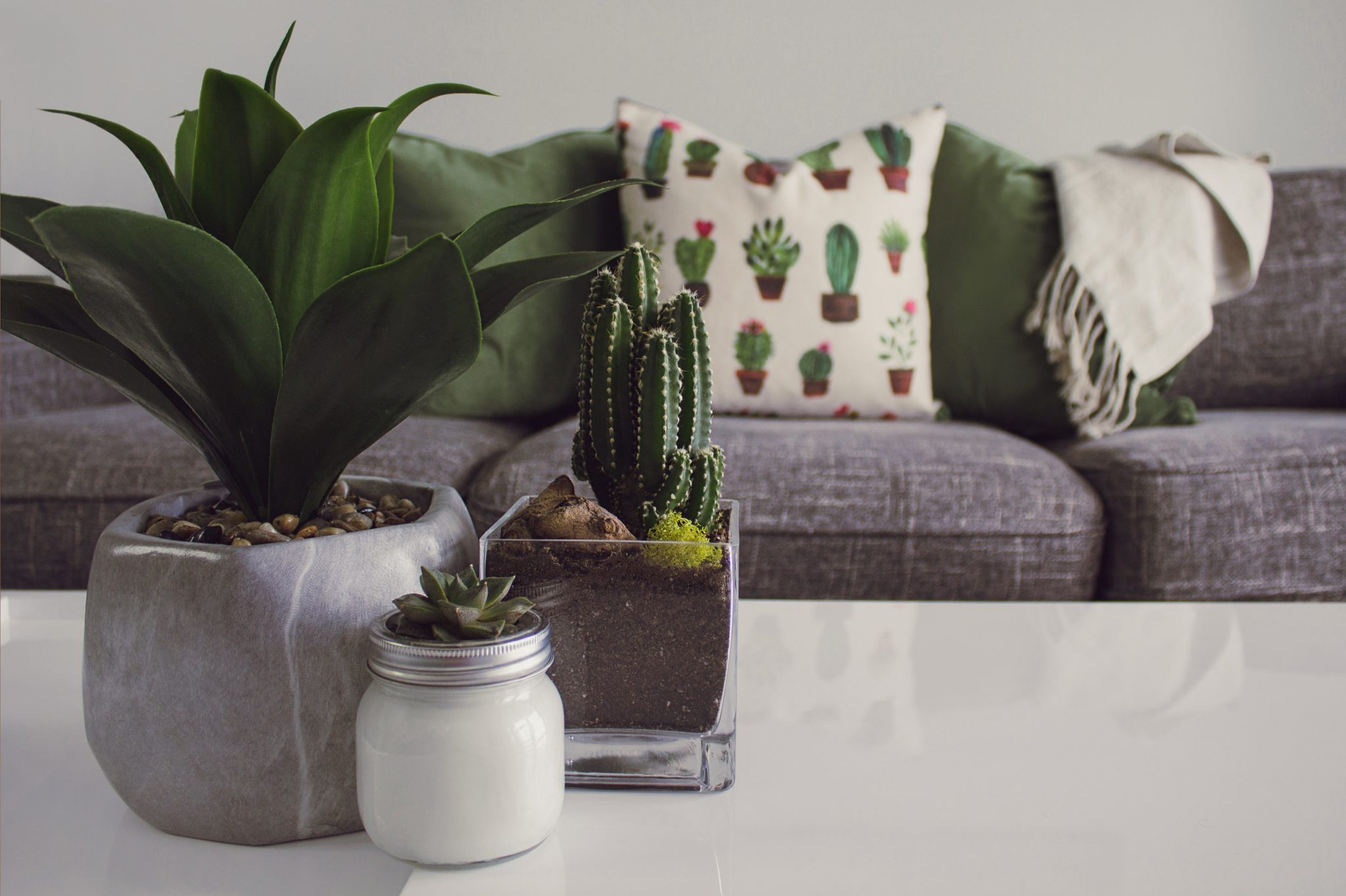 Piante Grasse Piccole Prezzi piante grasse: le migliori per abbellire la tua casa - guida