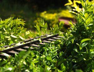 Tagliasiepe: come scegliere il più funzionale per avere un giardino perfetto
