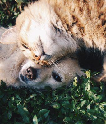spazzola per cani